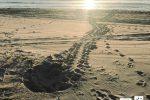 """Catania, tartarughe del mare nidificano alla Playa. Wwf: """"Ecosistema sano"""""""