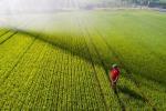 Arriva la tracciabilità per il riso biologico italiano