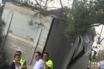 Maltempo nel Catanese, albero abbattuto dal vento: traffico in tilt tra Fiumefreddo e Giarre