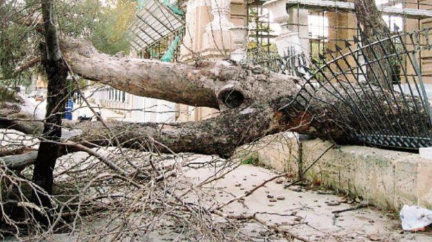 alberi pericolanti messina, Messina, Cronaca