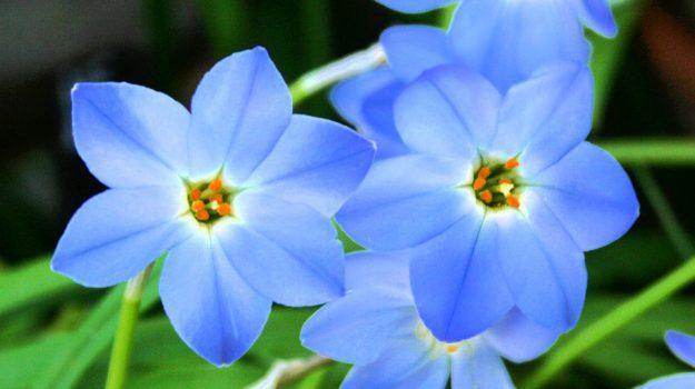 concorso girgenti in fiore ad agrigento, Agrigento, Cronaca