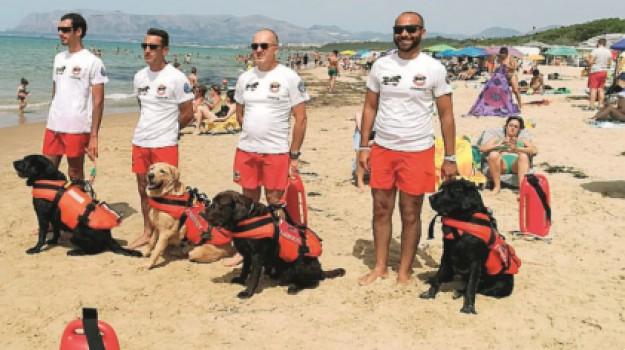 cani salvataggio ad alcamo marina, Trapani, Società