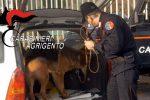 Droga nascosta in casa, il cane dei carabinieri la fiuta: un arresto a Ribera