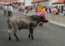 """Il drappo nella mano sinistra e il piccolo tenuto con il braccio destro: la """"corrida"""" nell'isola portoghese di Terceira (Azzorre)"""