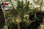 Coltivazione e spaccio di marijuana, due arresti a Cinisi e Terrasini