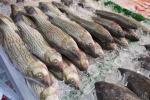 Pesca, 600 mila euro per la riqualifica del mercato ittico di Sciacca
