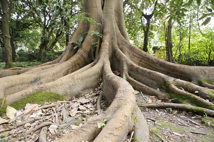 Palermo e gli altri 4 orti botanici italiani da non perdere