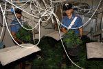 Palermo, scoperta una serra di marijuana in casa a Bonagia: arrestato 25enne