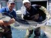 Pesca allo storione