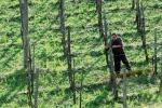 Pesticidi, la Ue prepara il giro di vite sul verderame