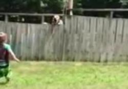 Le assi in legno non fermano il gioco di questi due cuccioli