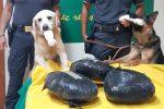 Sette chili di marijuana in un bagaglio, arrestata una nigeriana a Catania