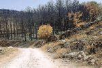 La pineta di Chiaramonte Gulfi dopo l'incendio
