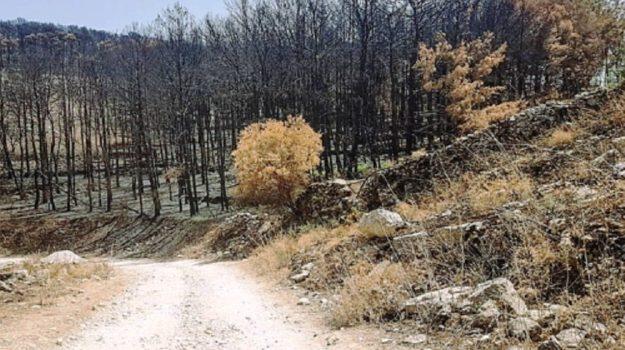 incendio pineta chiaramonte gulfi, Ragusa, Cronaca