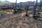 Rifugio per cani distrutto da un incendio ad Agrigento, randagi salvati dai vigili del fuoco