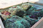 Ricci di mare pescati abusivamente, multa di 4 mila euro a Trapani