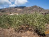 Viticoltura eroica, festival a Pantelleria