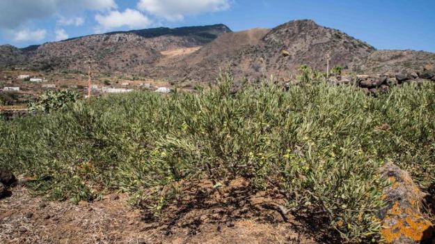 pantelleria coniglio selvatico, Trapani, Cronaca