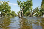 Maltempo, Coldiretti, danni alle colture per milioni di euro da Nord a Sud