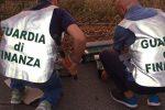 Sequestrati 110 cardellini selvatici, denunciato un negoziante di Catania