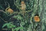 L'artista di Austin Randy Kirk e suo padre hanno hanno rappresentato le tre specie di primati estinti così come dovevano verosimilmente sembrare (Fonte: Painting on marble by Randwulph)