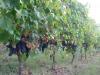 Vino: Lombardia, 3,5 mln per progetti internazionalizzazione