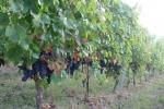 Lombardia, 3,5 mln per i progetti d'internazionalizzazione del vino