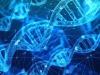 Realizzato un codice a barre genetico che memorizza in tempo reale la divisione delle singole cellule dellorganismo