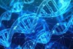 Realizzato un codice a barre genetico che memorizza in tempo reale la divisione delle singole cellule dell'organismo