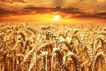La febbre del pianeta rischia di compromettere seriamente la produzione agricola e abbassare la produzione di colture fondamentali (fonte: pxhere)