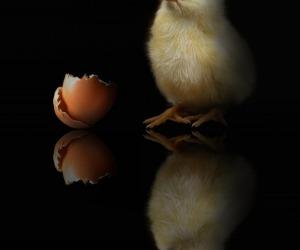 E' nato prima l'uovo o la gallina? Un test di fisica quantistica fatto con la luce indica che non ha più senso dirlo, perché cancella il prima e il dopo