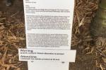 Istallazione sesso con piante, polemiche a Palermo