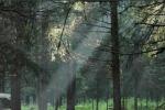 'Nella selva oscura' di Aldo Martina