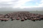 Burning Man, 70 mila in deserto Nevada