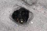 Buca sull'asfalto in via Montepellegrino a Palermo