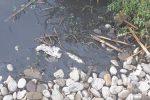 """Degrado lungo il fiume Nocella a Terrasini: """"Qui è in atto un vero e proprio disastro ambientale"""""""