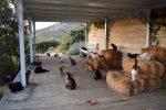 Cercasi accarezzatore di gatti in Grecia: in cambio stipendio, vitto, alloggio e... tanto amore