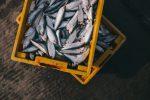 A Pozzallo la Sagra del Pesce sotto il segno dell'integrazione e della solidarietà
