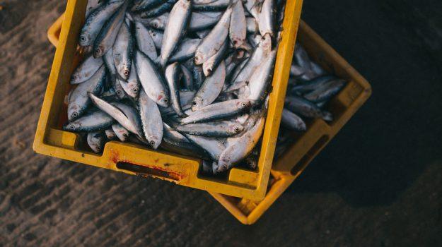 sagra del pesce pozzallo, Ragusa, Società