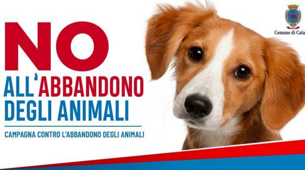 abbandono animali, Fabio Cantarella, Salvo Pogliese, Catania, Società