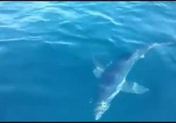 L'incontro con uno squalo verdesca che si è avvicinato alla barca in cerca di cibo