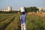 migranti al lavoro nei campi