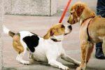 Cani a spasso senza microchip a Caltanissetta, multe per dieci proprietari