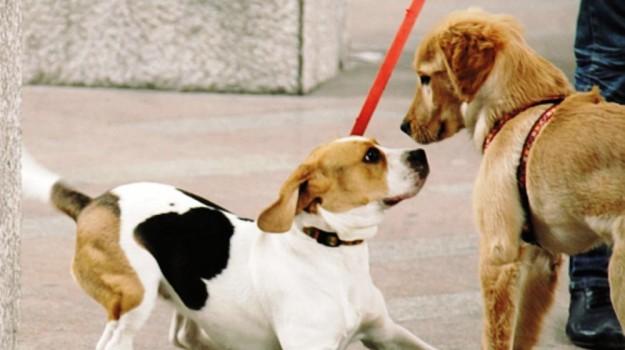 microchip cani, Caltanissetta, Cronaca