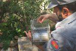Palermo, sequestrati cento cardellini e 4 tartarughe al mercato di Ballarò