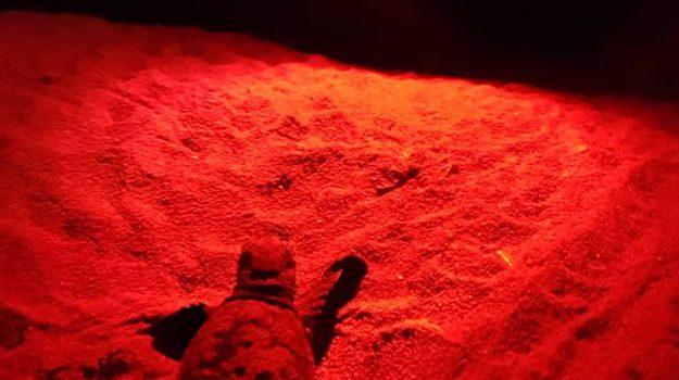 Tartaruga Caretta caretta, tartarughe priolo, Siracusa, Società