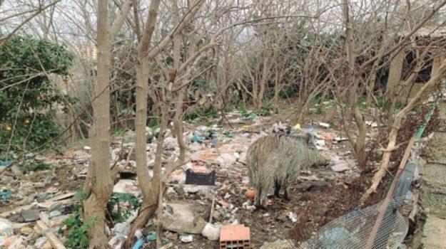 cinghiali messina, Messina, Politica