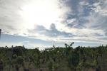Progetto per valorizzare vino Igt Palizzi