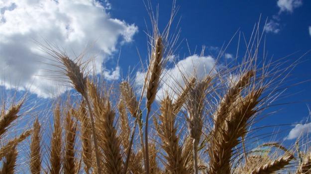festa del grano, Raddusa, Catania, Cultura