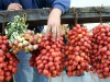 Pomodorini rubati, ricettatori scoperti grazie a esame Dna